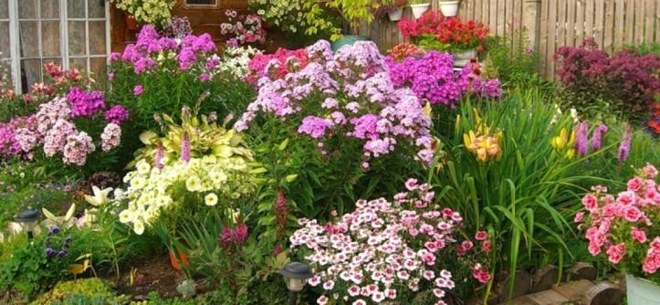 садовые цветы многолетники фото с названием