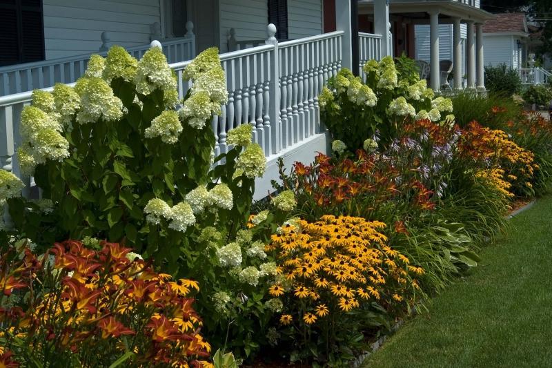 Цветы рудбекия на клумбе