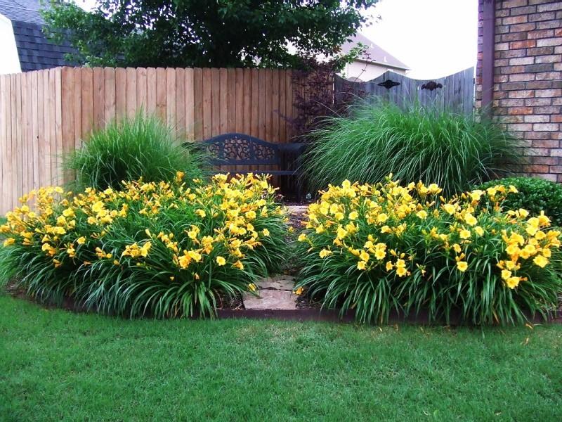 Лилейники в саду дизайн фото