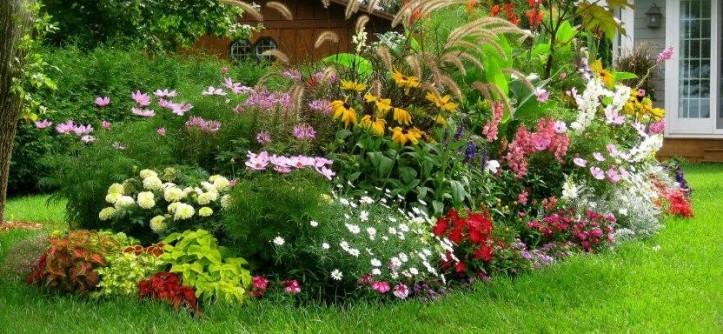 Долгоцветущие цветы для сада