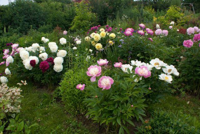 Скачать песня цветы в саду