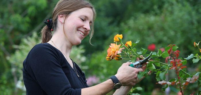 как обрезать розы весной после зимовки видео