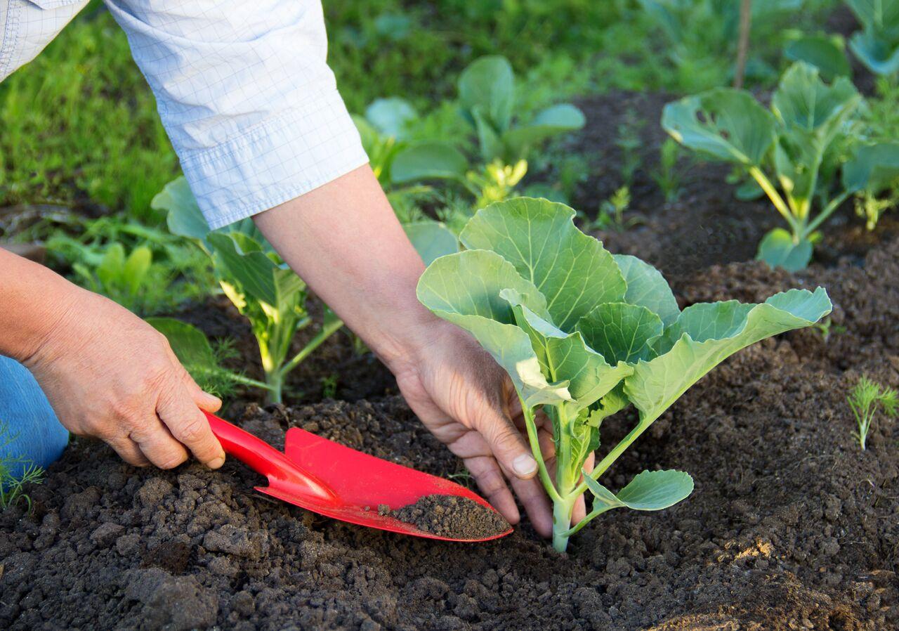 Посадка рассады: когда и как сажать семена 77