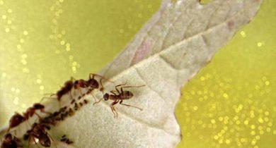 муравьи на даче как избавиться народными средствами