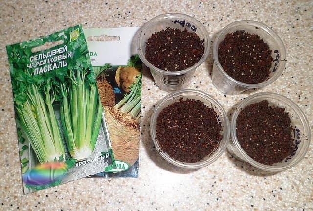 Как сажать семена сельдерея